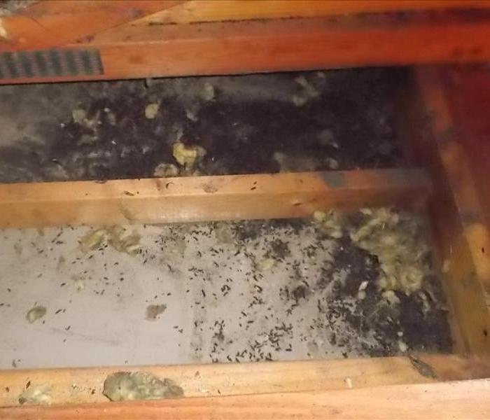 Bat Guano in Shelby Twp, MI Before