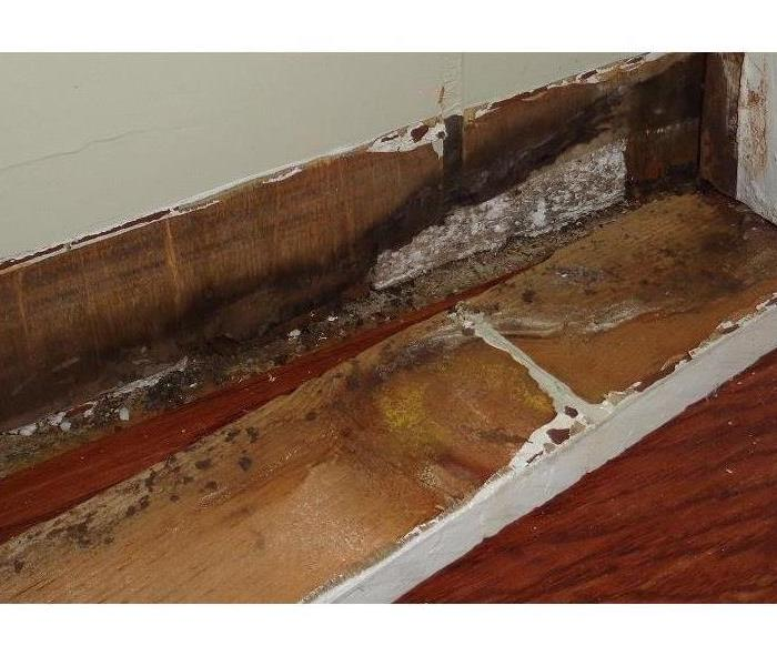 Mold Remediation Why Mold Does Not Impact Everyone the Same
